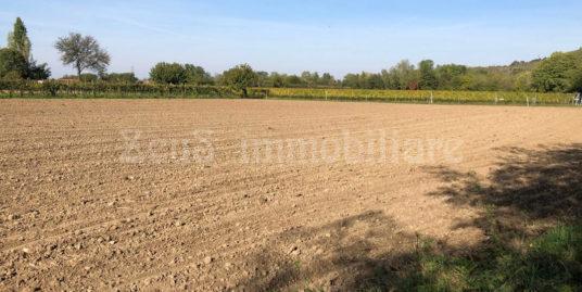 Terreno agricolo a Vermegliano